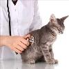 Ветеринарные клиники в Коле